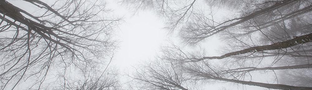 Bežky na Orave